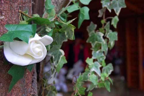 white flower outdoors