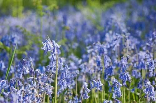 blue flowers outside